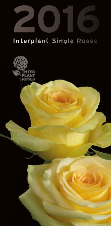 Interplant breeder of single stem roses