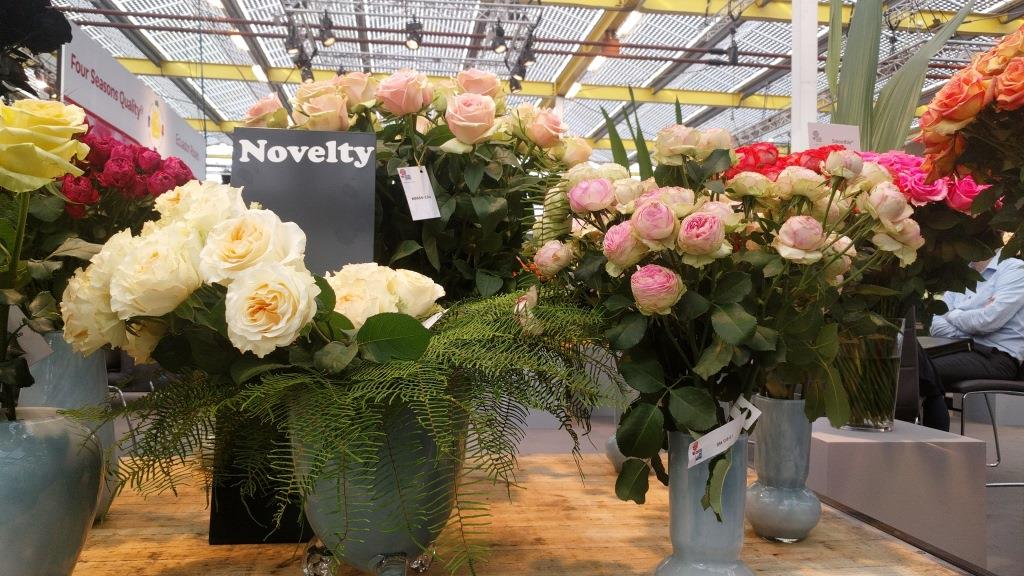 Interplant breeder of rose varieties