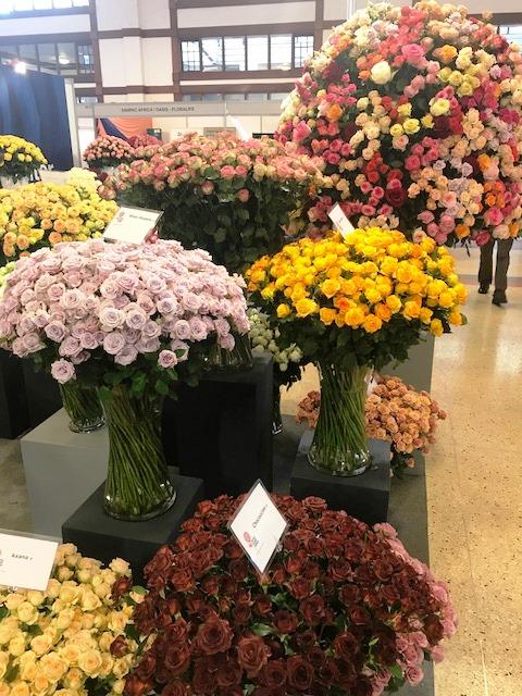 Interplant Roses East Africa Ltd. Breeder of Rose Varieties