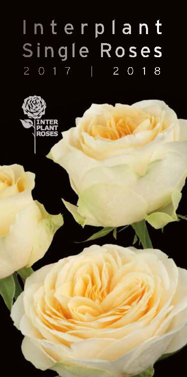 Interplant Roses B.V. Breeder of single rose varieties