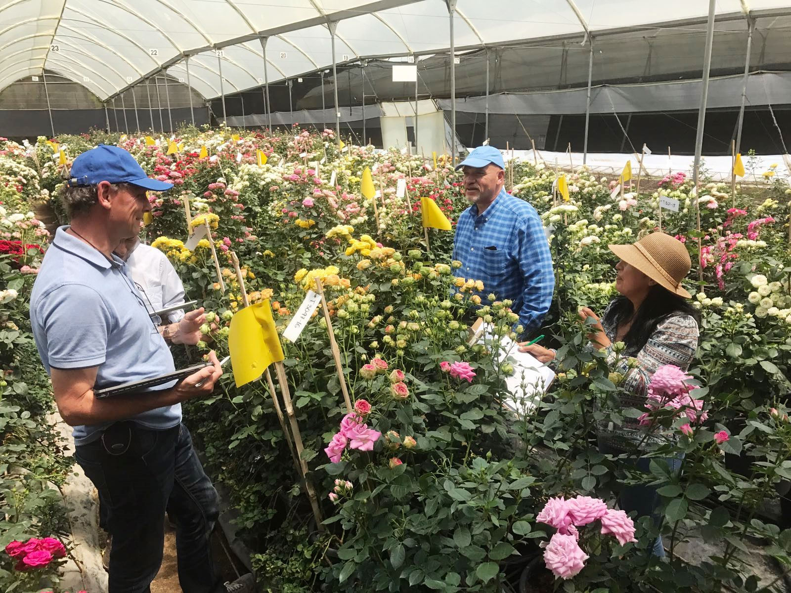 Interplant breeder of various rose varieties