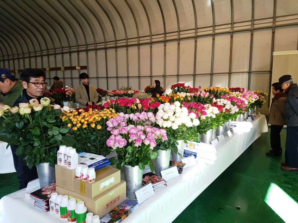Interplant Roses testing rose varieties worldwide