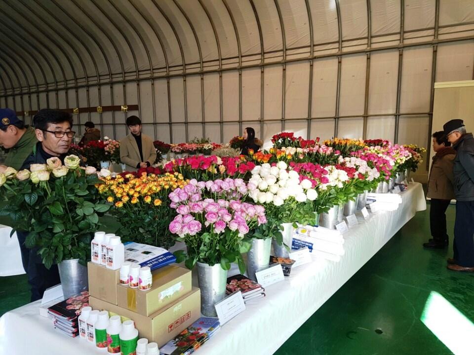 Interplant Roses testing rose varieties worldwide