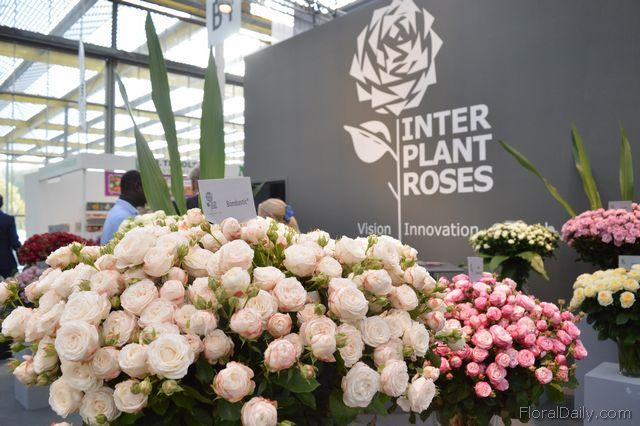 Interplant breeder of rose varieties