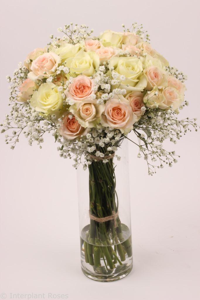 Interplant spray rose arrangement Rosanella Milky Way