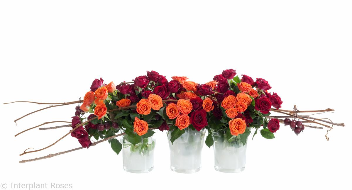 spray roses presentations bi-color