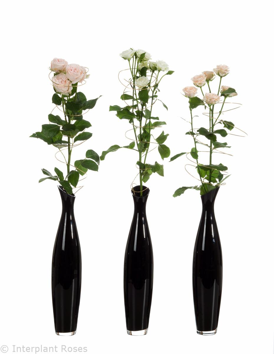 mixed spray roses