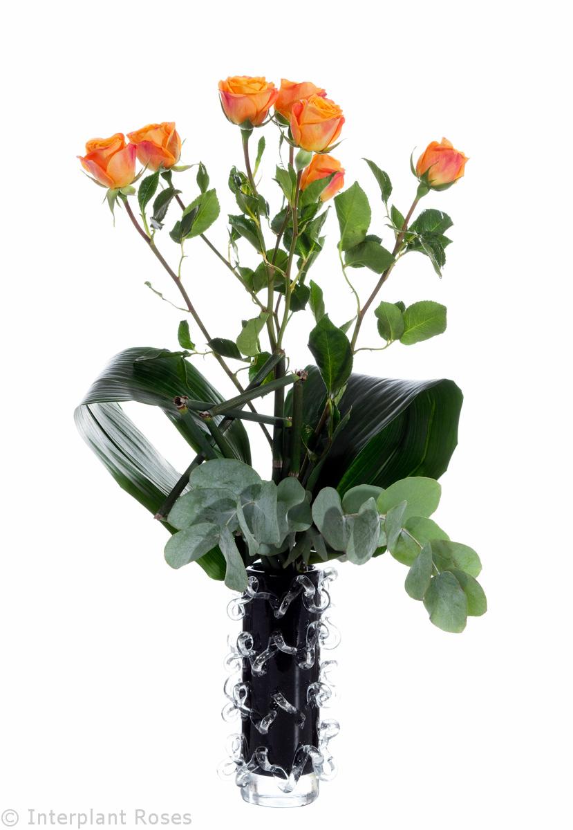 mono spray roses in vase
