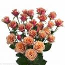 breeding premium spray roses Antigua