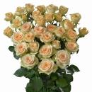 Interplant Roses breeder spray roses
