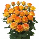 Interplant breeder Spray Roses