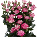 spray roses supermarkets Flash