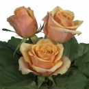 medium stemmed roses Golden