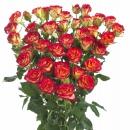 spray rose breeding Mic