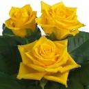 sweetheart rose breeding Milonga