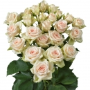 Interplant Roses spray rose breeder