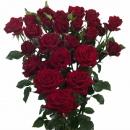 Regular Spray Rose, Puskhin