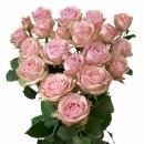 Interplant Grandiflora breeders Spray Roses