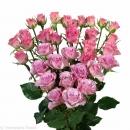 spray rose varieties Rowena