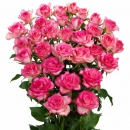 Spray rose Interplant Roses B.V.