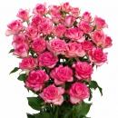 Spray rose Interplant Roses B.V.
