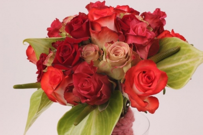 Arrangement Interplant variety Blush, Devotion, Jaipur