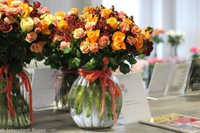 Tycoon breeder Interplant Roses