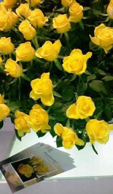 Moonwalk Intermediate Hybrid Tea Rose