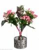 mono bouquet spray roses Safina
