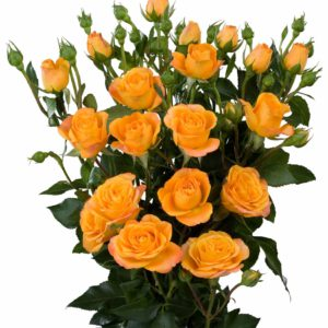orange spray roses Abeba