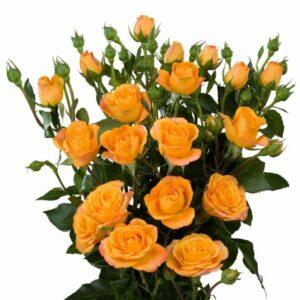 orange spray roses Abeba