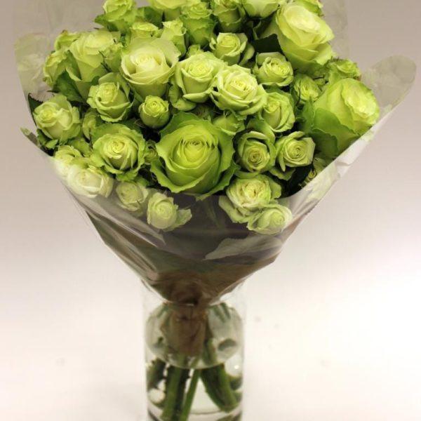 Premium spray rose variety Green Glow