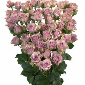 violet spray roses Janice