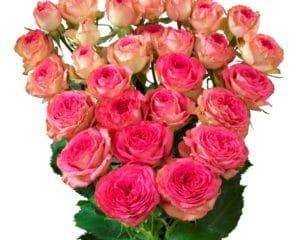 Interplant breeder of a wide range of rose varieties