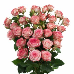 long stemmed spray roses Leila