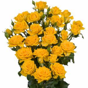 yellow spray roses Mariah