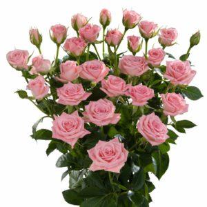 long stemmed spray roses Odilia