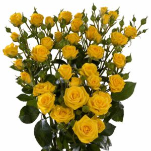 yellow spray roses Shine
