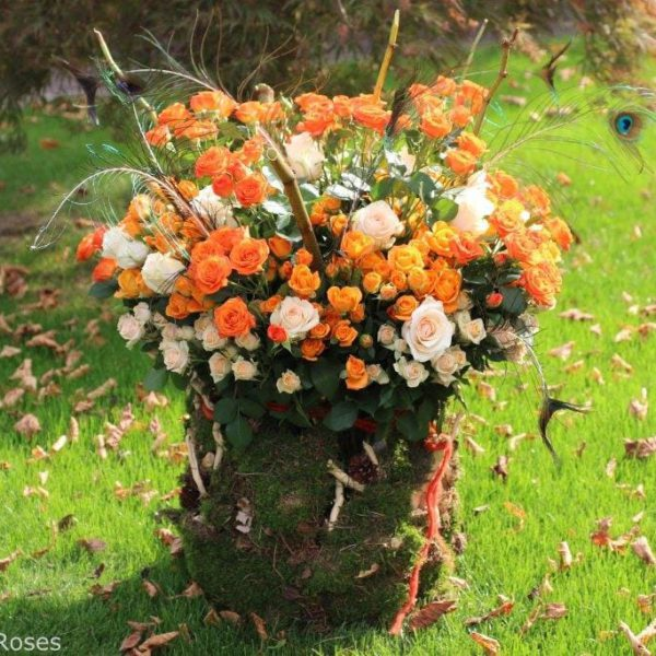 Interplant spray rose breeder