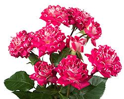 #ashtag flowers