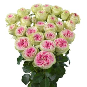 Interplant Roses breeder of spray rose varieties