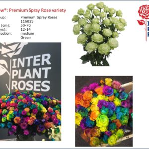 Interplant Roses B.V. Breeder of various rose varieties