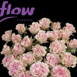 Flow final alt