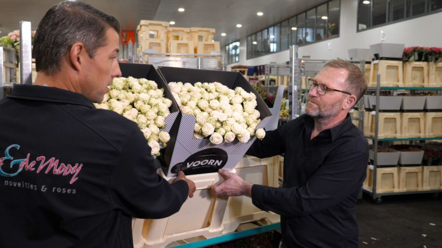 Florist Veldhuysen choses spray roses with the right cut stage