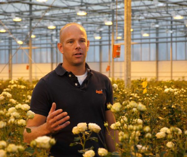Dutch spray rose grower Frank Voorn