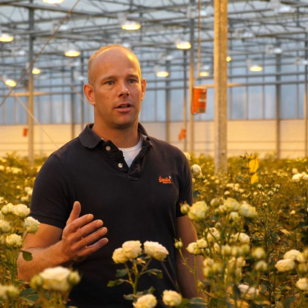 Dutch spray rose grower Frank Voorn